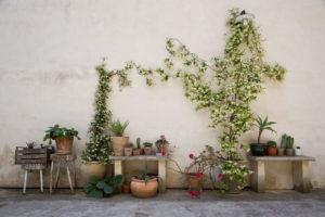 nuvole barocche piante